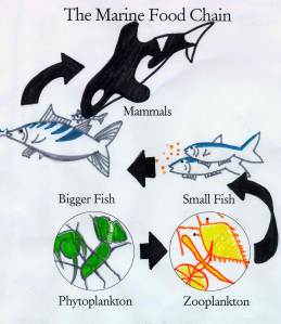 RM marine food chain